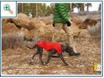 Магазин DOGS ACTIVE профессиональная амуниция для собак F62eb2c27355a6ec43d1c5aff7714fc225cca7163971571