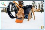 Магазин DOGS ACTIVE профессиональная амуниция для собак Fdac3a0f7c082c2e6f1e53c38949976925cca7168309266