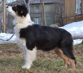 Мои собаки: Зена и Шива и их друзья весты - Страница 2 22e0db67779cfcb2f518b1602da09bced557f9180625842