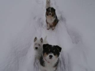 Мои собаки: Зена и Шива и их друзья весты 2f5141da475ca048fafe1af19da24ec7d557f8176525919