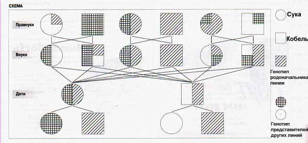 Инбридинг. Обсуждение F833b2fae3fa52a763c4f64d2d8d67c2b28229171366847