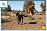 Магазин DOGS ACTIVE профессиональная амуниция для собак 210235df259b35221067da9bc623043d4d25ac171947982