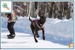 Магазин DOGS ACTIVE профессиональная амуниция для собак 61aab612195688acf7e4446c5609ea834d25ac171947980