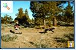 Магазин DOGS ACTIVE проф.амуниция для собак A2f46f3b69fe92264845fe159ed61d9f25cca7171859151