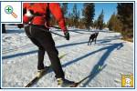 Магазин DOGS ACTIVE профессиональная амуниция для собак A6bdd67343aea644fe388fcf85f7b8a44d25ac171947983