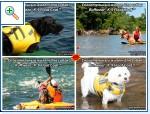 Магазин DOGS ACTIVE профессиональная амуниция для собак - Страница 2 C0f503088c852fc0596c14844130569725cca0183228640