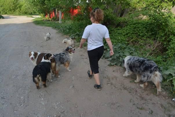 Мои собаки: Зена и Шива и их друзья весты - Страница 4 689b171a2026605b68b9c575cbe50062d557f8185984018
