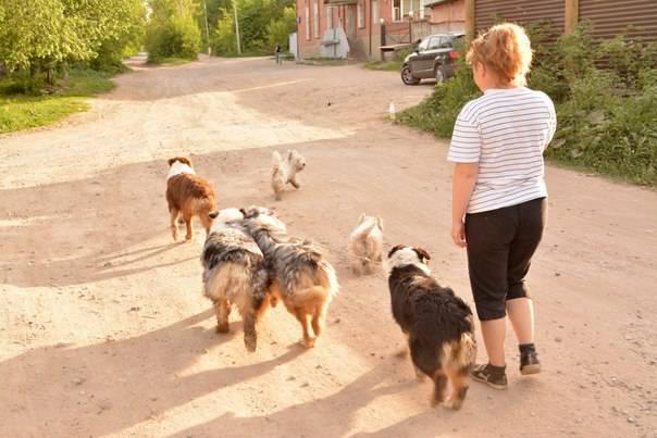 Мои собаки: Зена и Шива и их друзья весты - Страница 4 C7cfbcb0375999d458ae72e52222fb00d557f8185984018