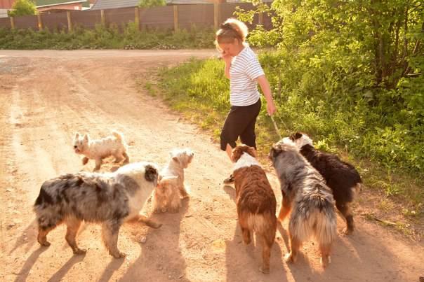 Мои собаки: Зена и Шива и их друзья весты - Страница 4 De046349bb82e88b62db8eb8fe288f8cd557f8185984019