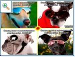 Магазин DOGS ACTIVE профессиональная амуниция для собак - Страница 2 3c6d65a9d0606595354269854f68bdd125cca0184722741