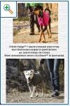 Магазин DOGS ACTIVE профессиональная амуниция для собак - Страница 2 Bd5fdda382d3d4b6e0d5bf1a312aeb6f25cca0204008002