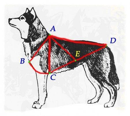 Магазин DOGS ACTIVE профессиональная амуниция для собак - Страница 3 97fc27645af017c0c207beade3f29fc225cca0236474532
