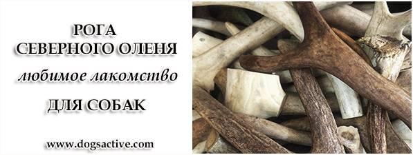 Магазин DOGS ACTIVE профессиональная амуниция для собак - Страница 3 3da0efccc9fd410fa8fc45ba2bb5ae75b94499257709168
