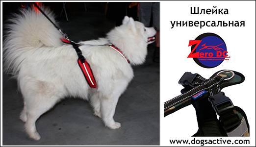 Магазин DOGS ACTIVE профессиональная амуниция для собак - Страница 3 41b6b6033e5e13289969c3d012cc53f4b94499250802487
