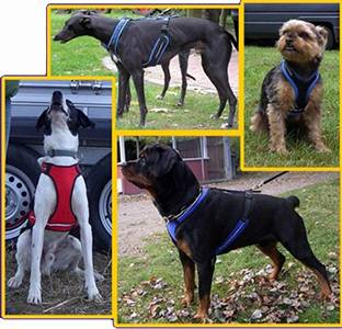 Магазин DOGS ACTIVE профессиональная амуниция для собак - Страница 3 834ff3373e1feacee08f90b128bd2b39b94499250801318