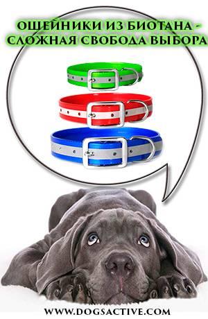 Магазин DOGS ACTIVE профессиональная амуниция для собак - Страница 3 9e6be9eef9f3d654b3e43f0cad81cf6d6dbc7d240438591