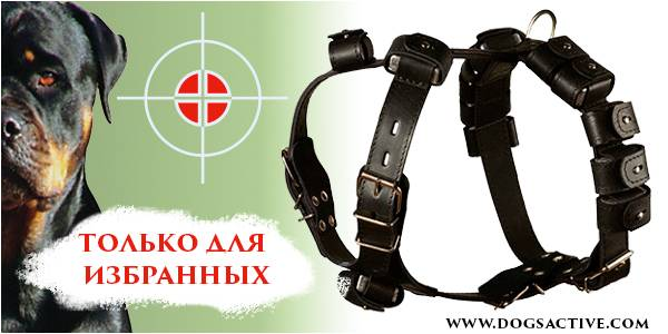 Магазин DOGS ACTIVE профессиональная амуниция для собак - Страница 3 F483a40b330c4ab53728b23307051a0125cca0244059896