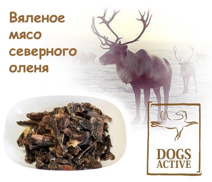 Магазин DOGS ACTIVE профессиональная амуниция для собак - Страница 4 0393634908ca91fa3bb4c6c940e80c49b28c0a269476792