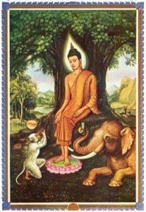 Значение дней недели в Буддизме при рождении E8fb4f169bd68062219cdb535dd257905d50b6331449606