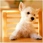 Аватары с животными - Страница 2 9a5a0af151fa0b7e9a374c99be0969694d7a4c97736017