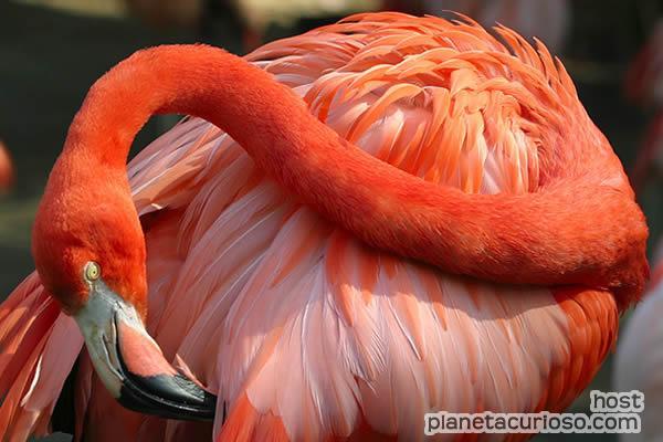 CACHORROS Y ANIMALES Flamingos-maquillan-plumas
