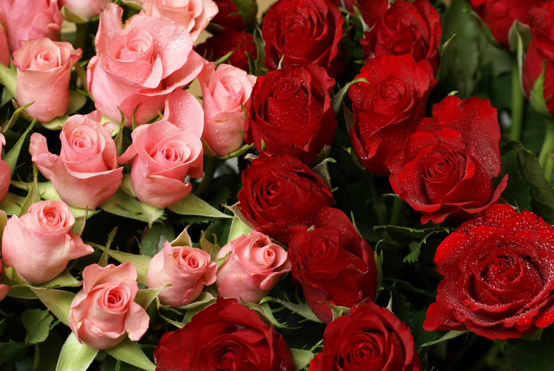 Trendafila - Faqe 13 Pink-and-red-roses-bouquet01606