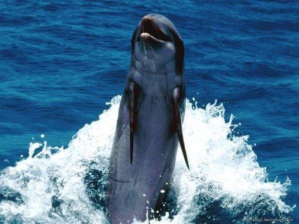 Les dauphins et les orques 3c35cd53
