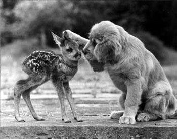 De belles images d'amitié 61107518