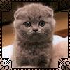 Аватары с животными - Страница 3 Cat115