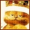 Аватары с животными - Страница 3 Cat135