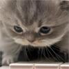 Аватары с животными - Страница 3 Cat160