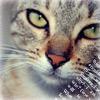 Аватары с животными - Страница 3 Cat208