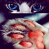Аватары с животными - Страница 3 Cat224