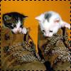 Аватары с животными - Страница 3 Cat90
