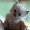 Аватары с животными - Страница 3 Cat92