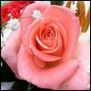 Аватары с цветами Flower11
