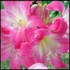 Аватары с цветами Flower19
