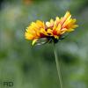 Аватары с цветами Flower32