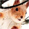 Аватары с животными Mo16