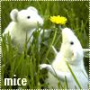Аватары с животными Mo5