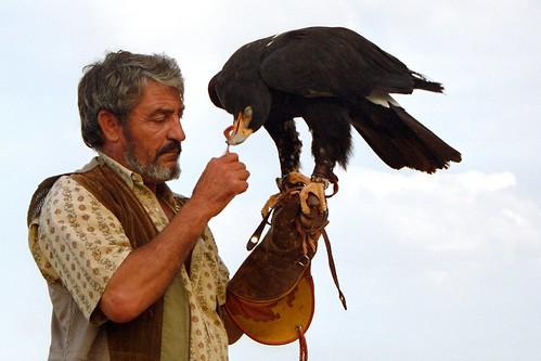 Comparação do tamanho de águias  com relação ao homem. 278471487_94aeb8dc2c