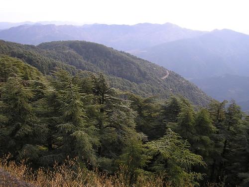 صور غابات الشريعة الجزائرية الساحرة 27391909_9a5c7f8838
