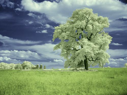 Bilo jednom jedno drvo 62320099_c71e00a17f