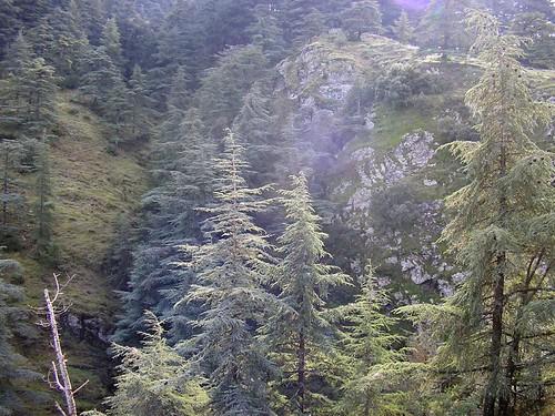 صور غابات الشريعة الجزائرية الساحرة 40692401_0433e02449