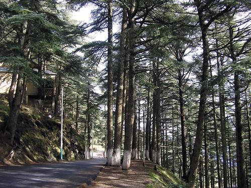 صور غابات الشريعة الجزائرية الساحرة 40692533_a93e2a3760
