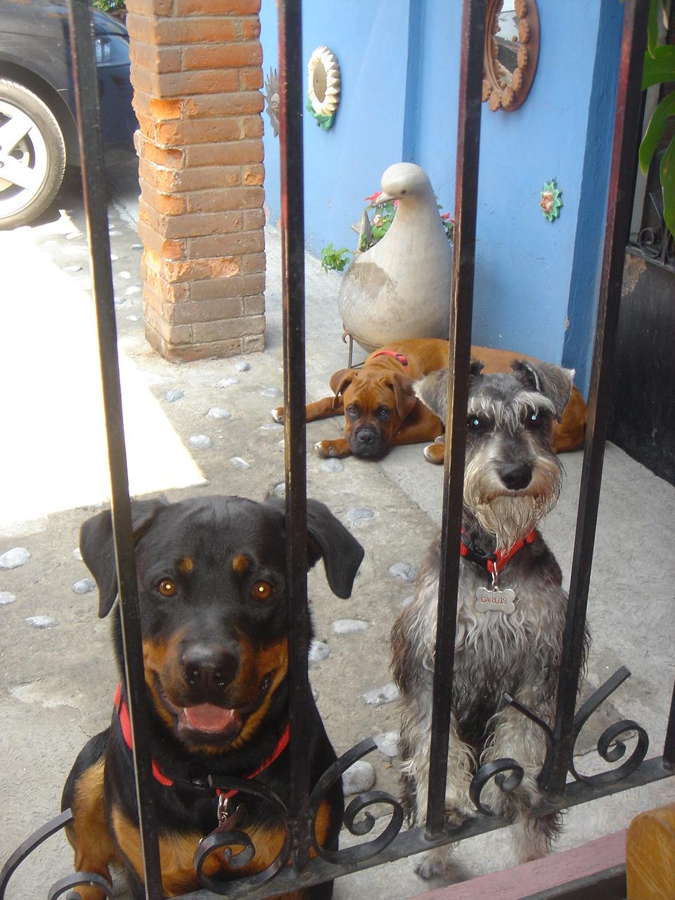 Pancho, el perro de la lotería, making off 143844185_424d94405d_o