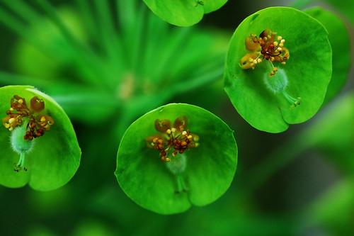 Magija zelene 140825501_8d1b3ddab7