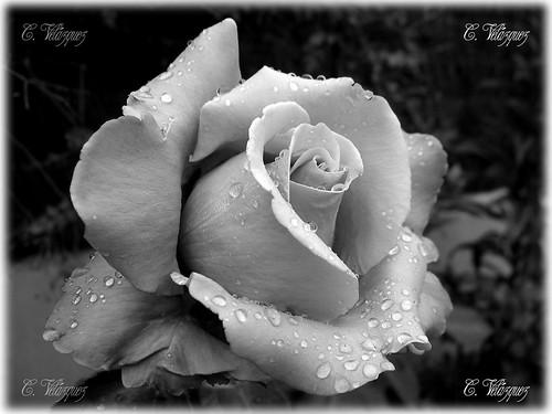 Sinfonia en blanco y negro - Página 23 1478719727_86522d4ca7