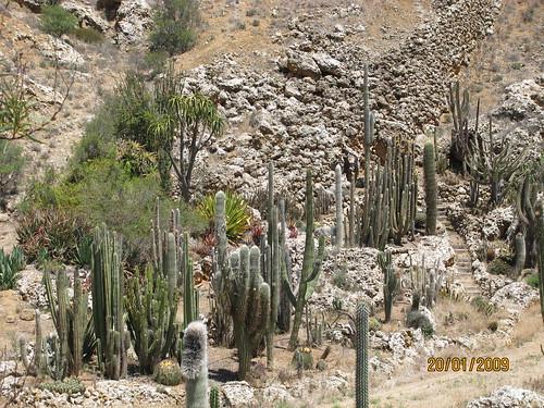 Outdoor cactus garden in riverland 4605856009_f8c5a80d47