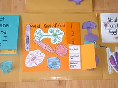 LAPBOOK ( libro fai da te che si ricava da una semplice cartella a tre lembi e qualche foglio di carta colorata) 552301043_bcebeeaa3d_m